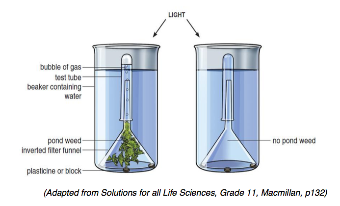 Life Science Grade 11 Photosynthesis Practical Question Papers