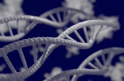Genetics and Inheritance Grade 12 Notes (Questions and Answers) pdf